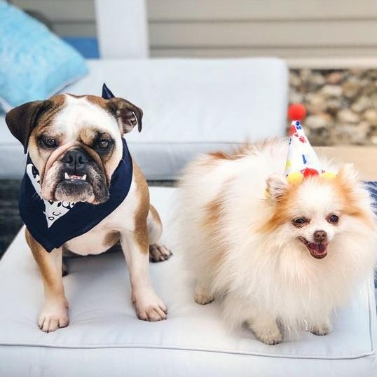 We The Dogs DC Bandana By Barkley & Wagz