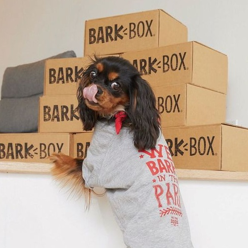 We Bark in The Park Tee For We the Dogs DC By Barkley & Wagz