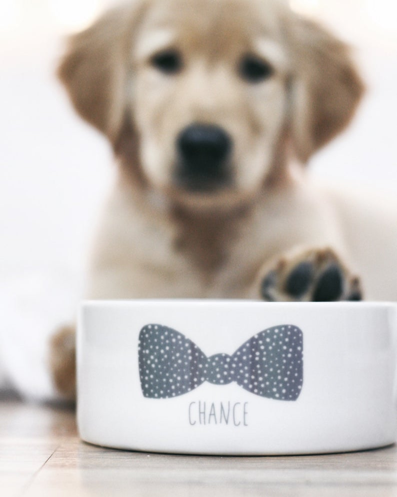 Custom Bow Tie Dog Bowl By Barkley & Wagz