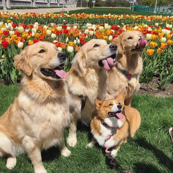 12. - No matter what, your group photos are pawfection (and total #squadgoals).