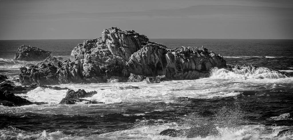 Point Lobos-8.jpg
