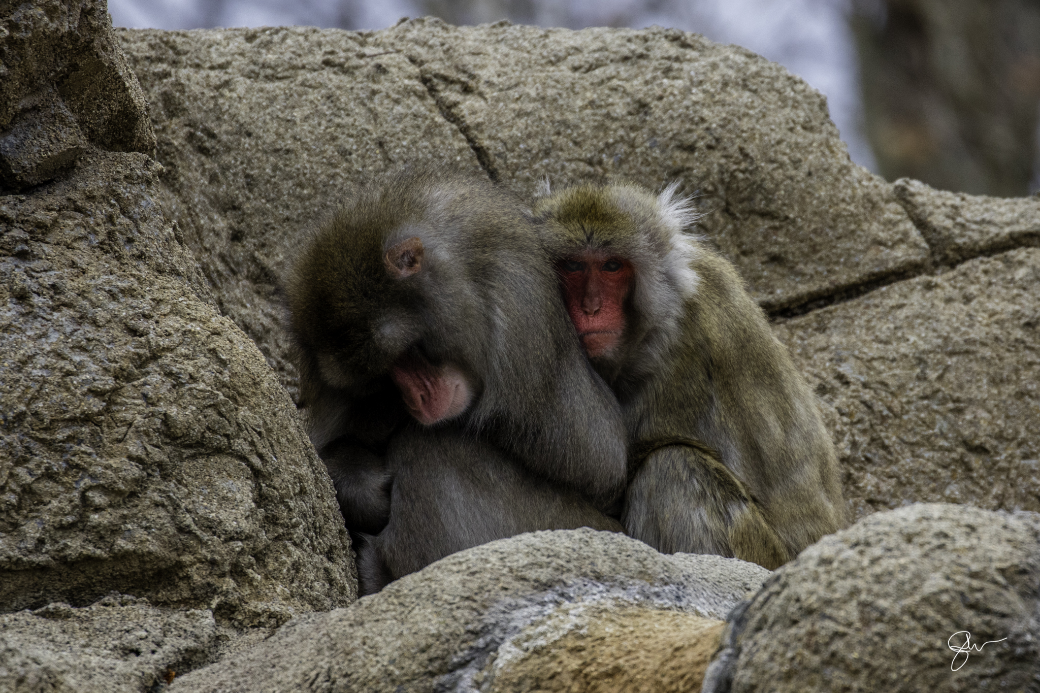 2015 Dec at Zoo-4.jpg