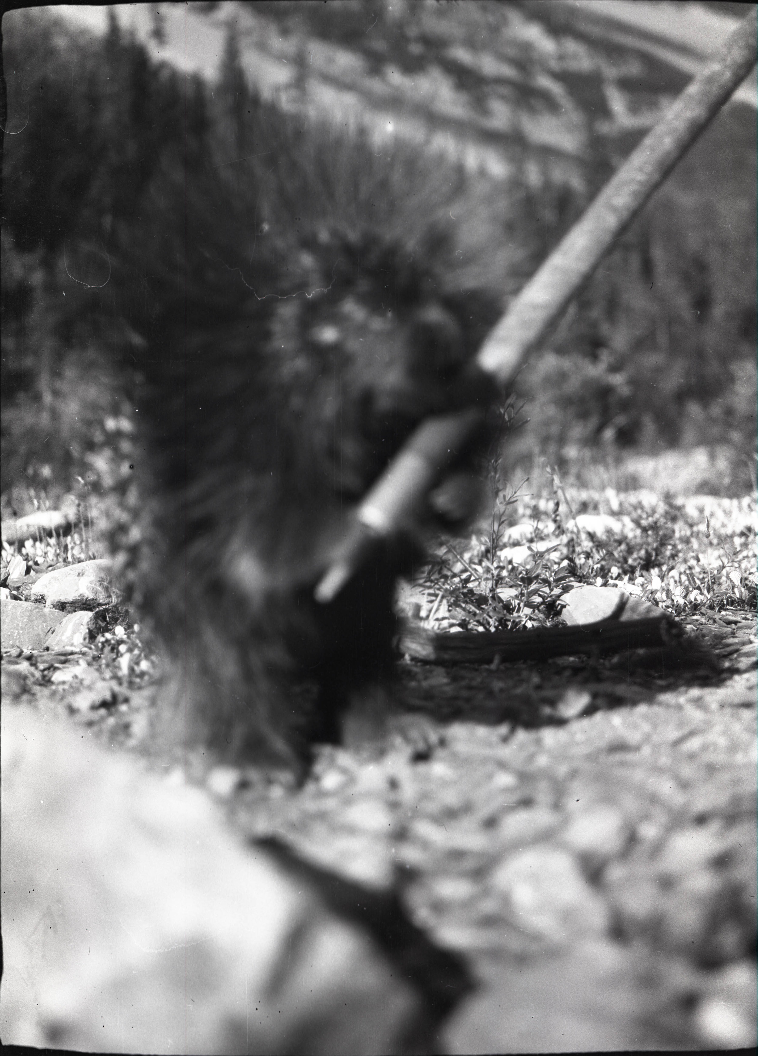 Also useful for keeping the occasional porcupine at bay - From the Andrew James Gilmour collection