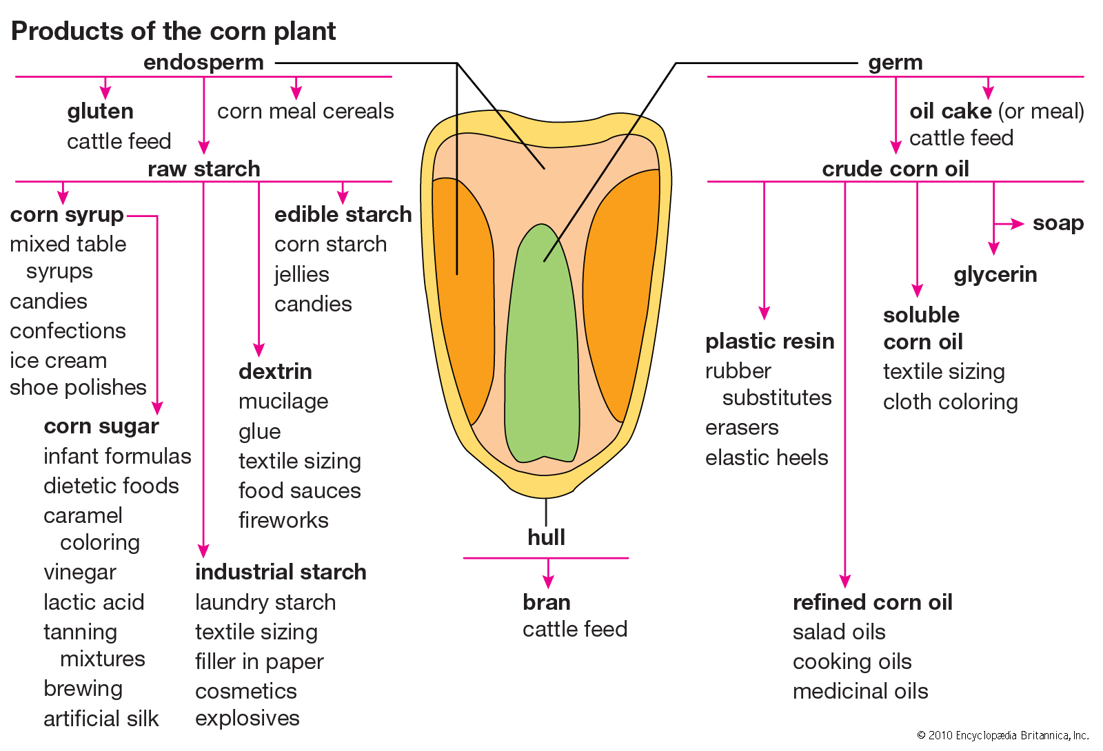 Look at all the things we can turn corn into! How many of these would you be able to recognize as corn? Would you be able to describe how it got from corn to the end product? Could you do it with a couple rocks, some water, and a campfire?