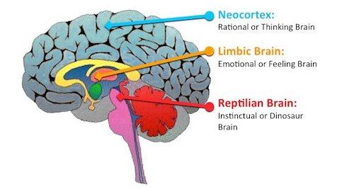 Evolutionary Brain Regions