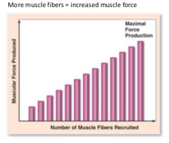 Muscle Fiber Recruitment Graph