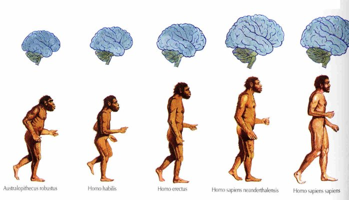 Evolution of brain and body