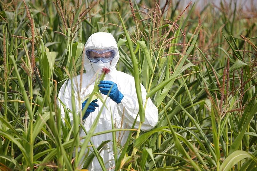 Person monitoring crops.