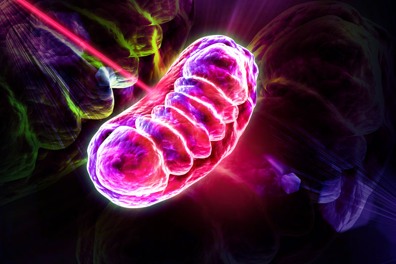 Picture of mitochondria being irradiated and stimulated by red and infrared light.