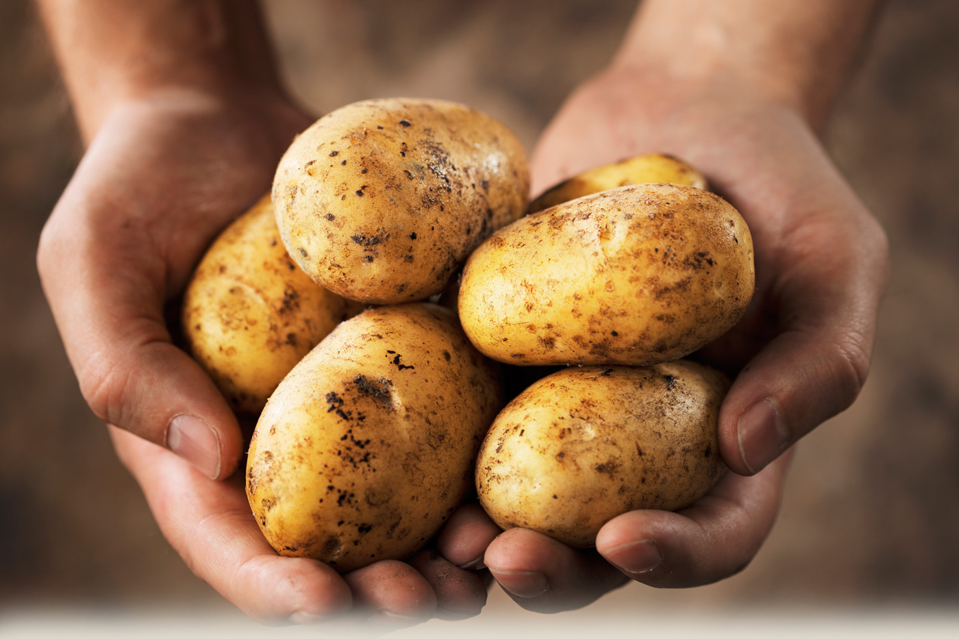 Person holding potatoes in their hands.