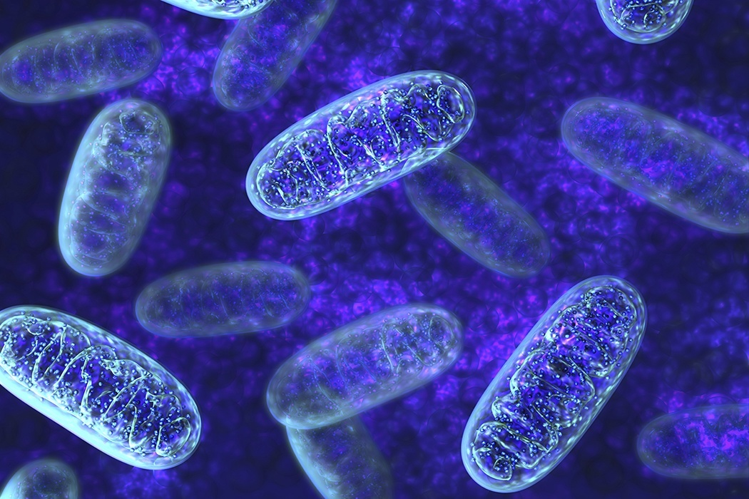 Mitochondria. Support mitochondria health is an important part of preventing and reversing cognitive decline and dementia.