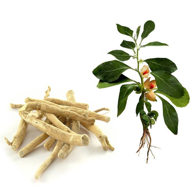 Ashwagandha helps regenerate myelin.