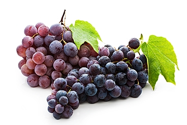 Picture of grapes. Grapes are rich in resveratrol, an antioxidant than help you form new synapses in your brain.