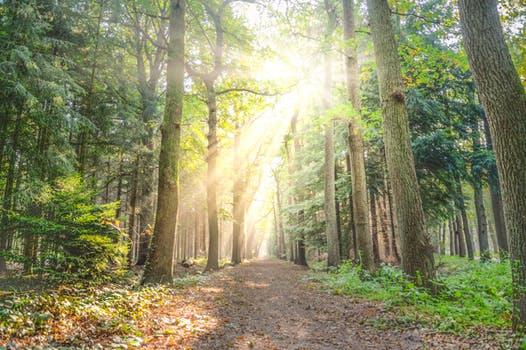 Sunlight shining through trees in a forest. Sunlight gives us Vitamin D, one of the main nutrient deficiencies that can cause depression.