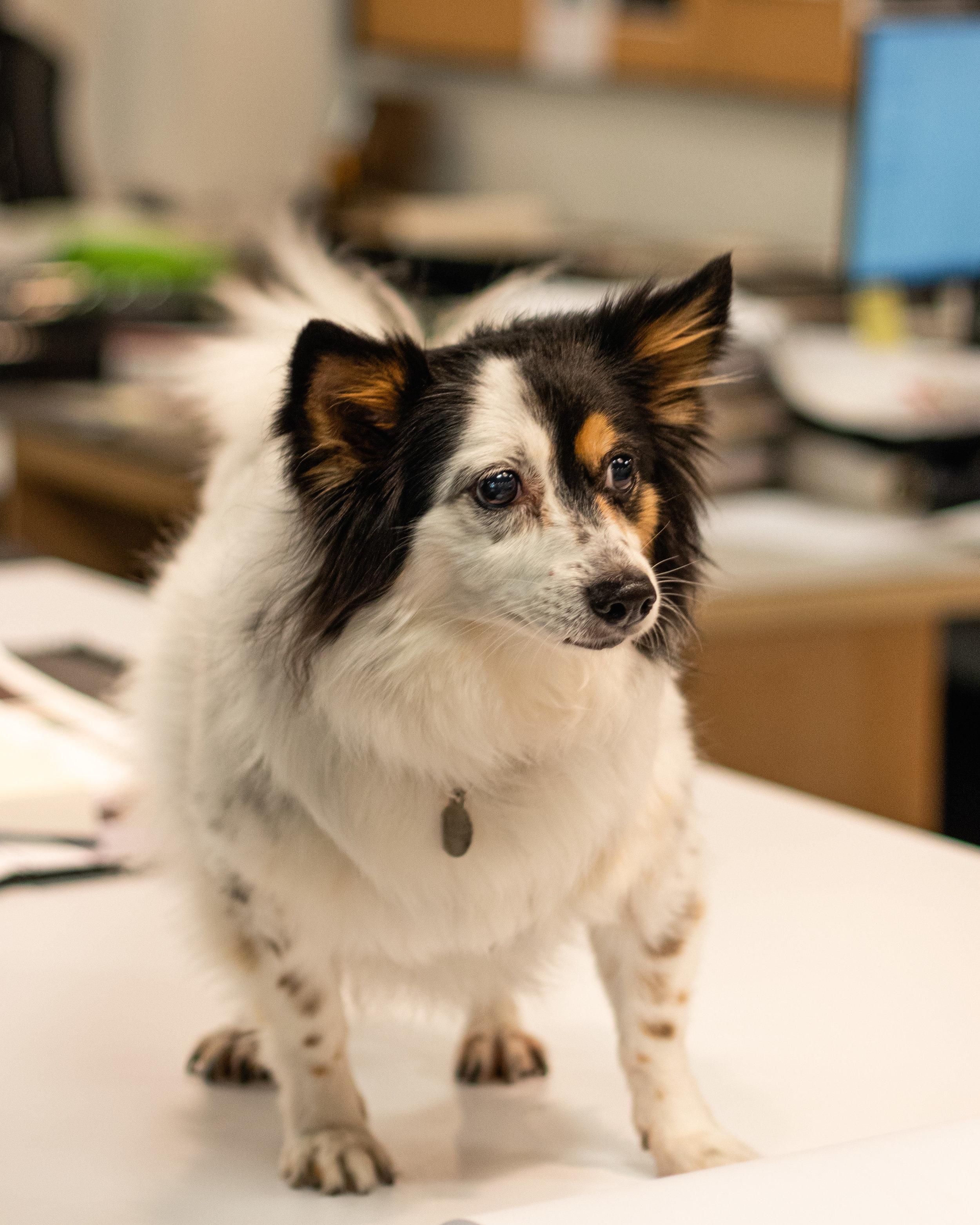 Emily - Office Pet