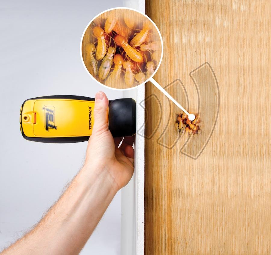 Capable of detecting termites behind walls