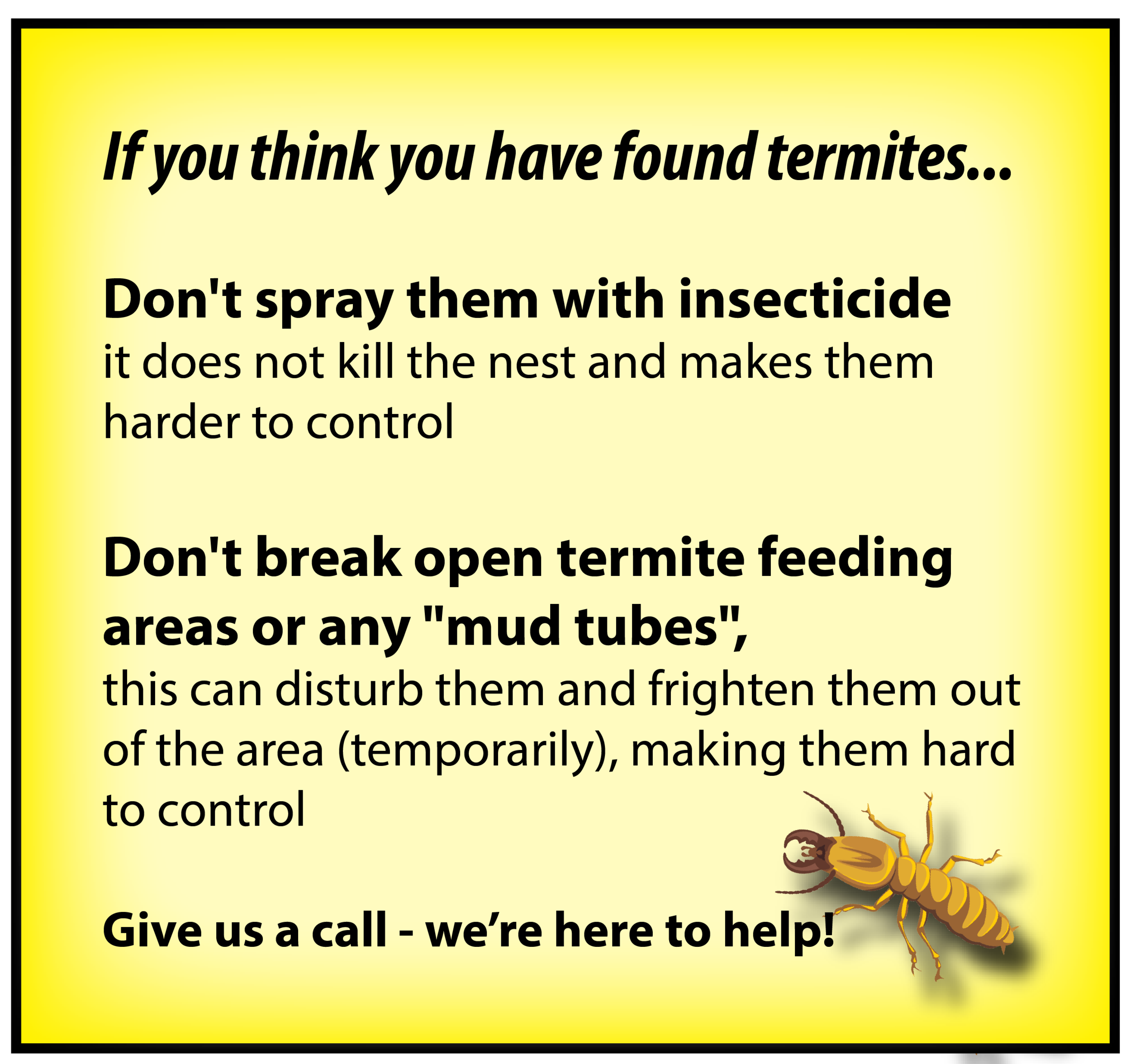 Found termites - here's what to do
