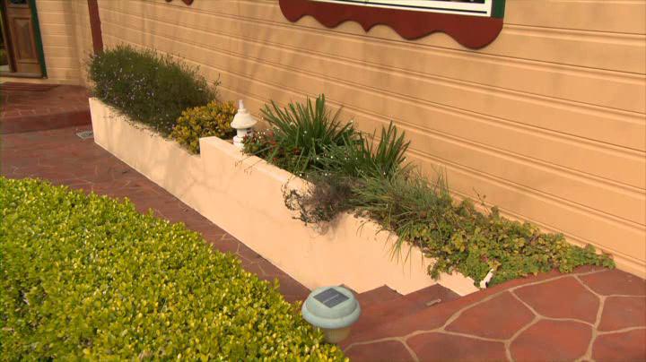 Garden beds next to the home make it easy for ants (and termites!) to enter your house