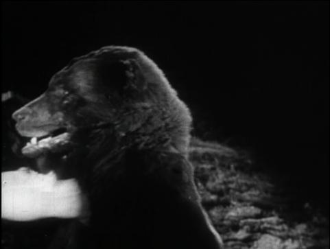 bear_getting_kicked_by_red_lg.jpg