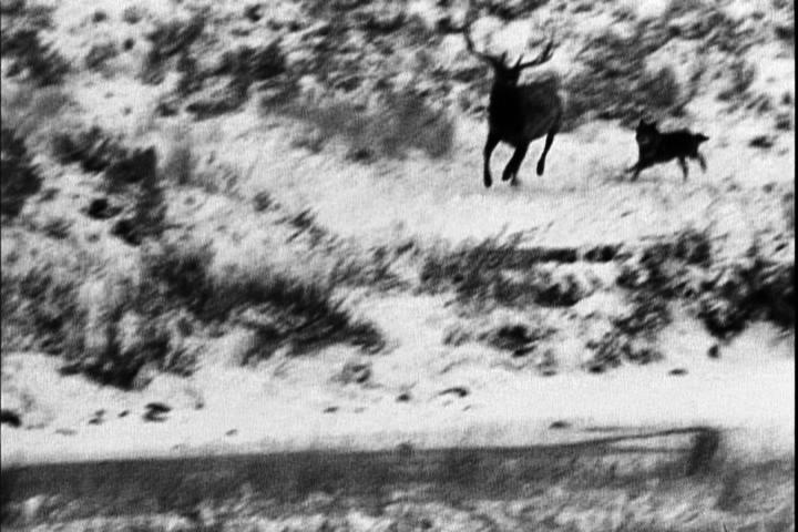 elk chase.png