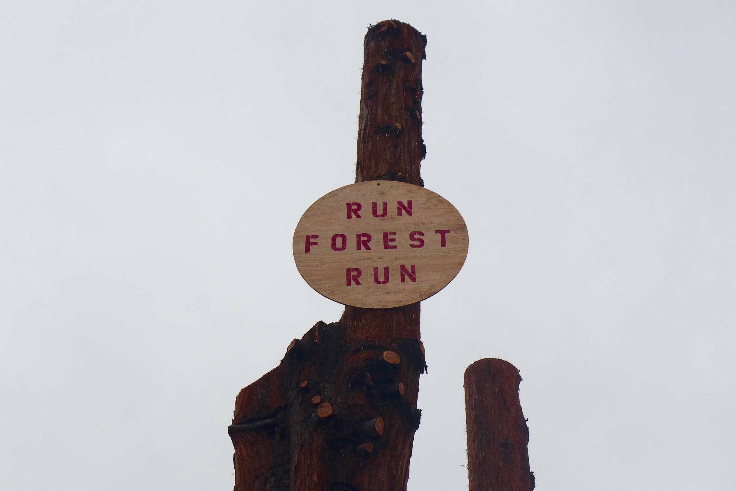run forest CU.jpg