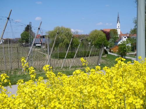 Agricultural district of Hallertau