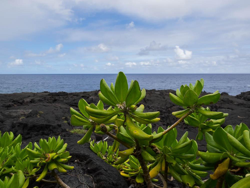 Big Island Hawaii - Photo by Derrick L Shaw