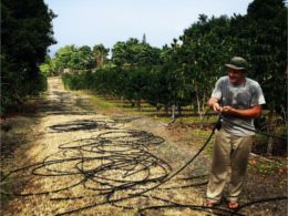 jeremy-coffee-farm-irrigation.jpg