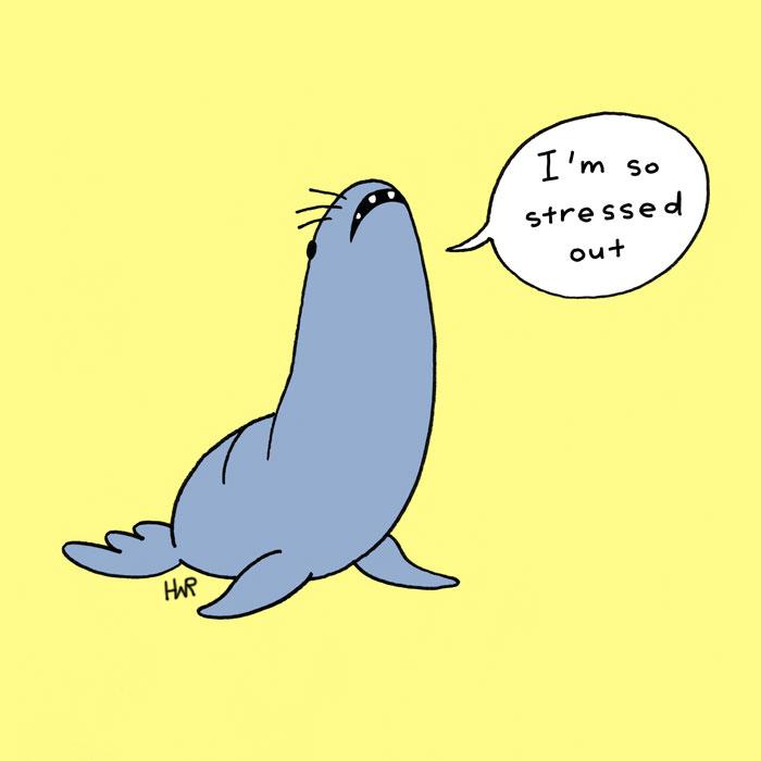 anxiousanimal_seals.jpg
