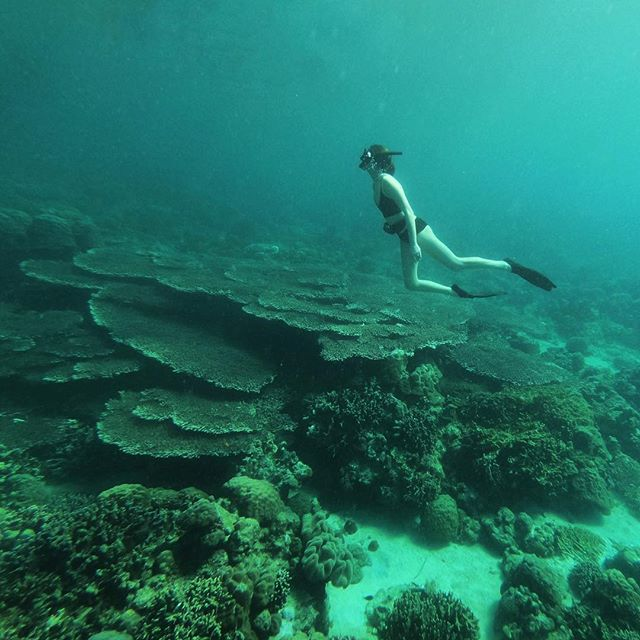 Freediving in pristine, protected reefs. -