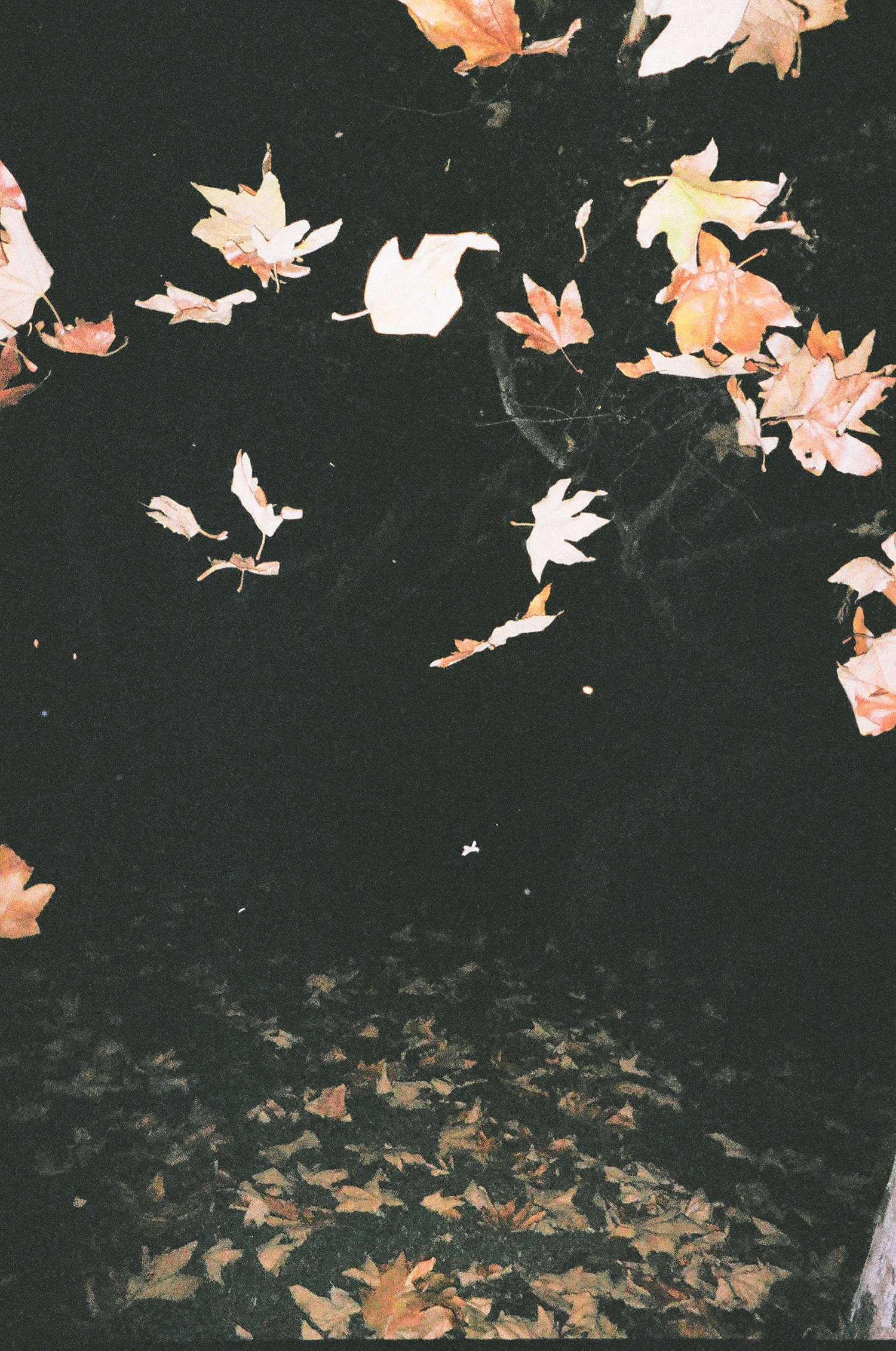 whoiscx_christina_choi_photography_disposable_film_3.jpg