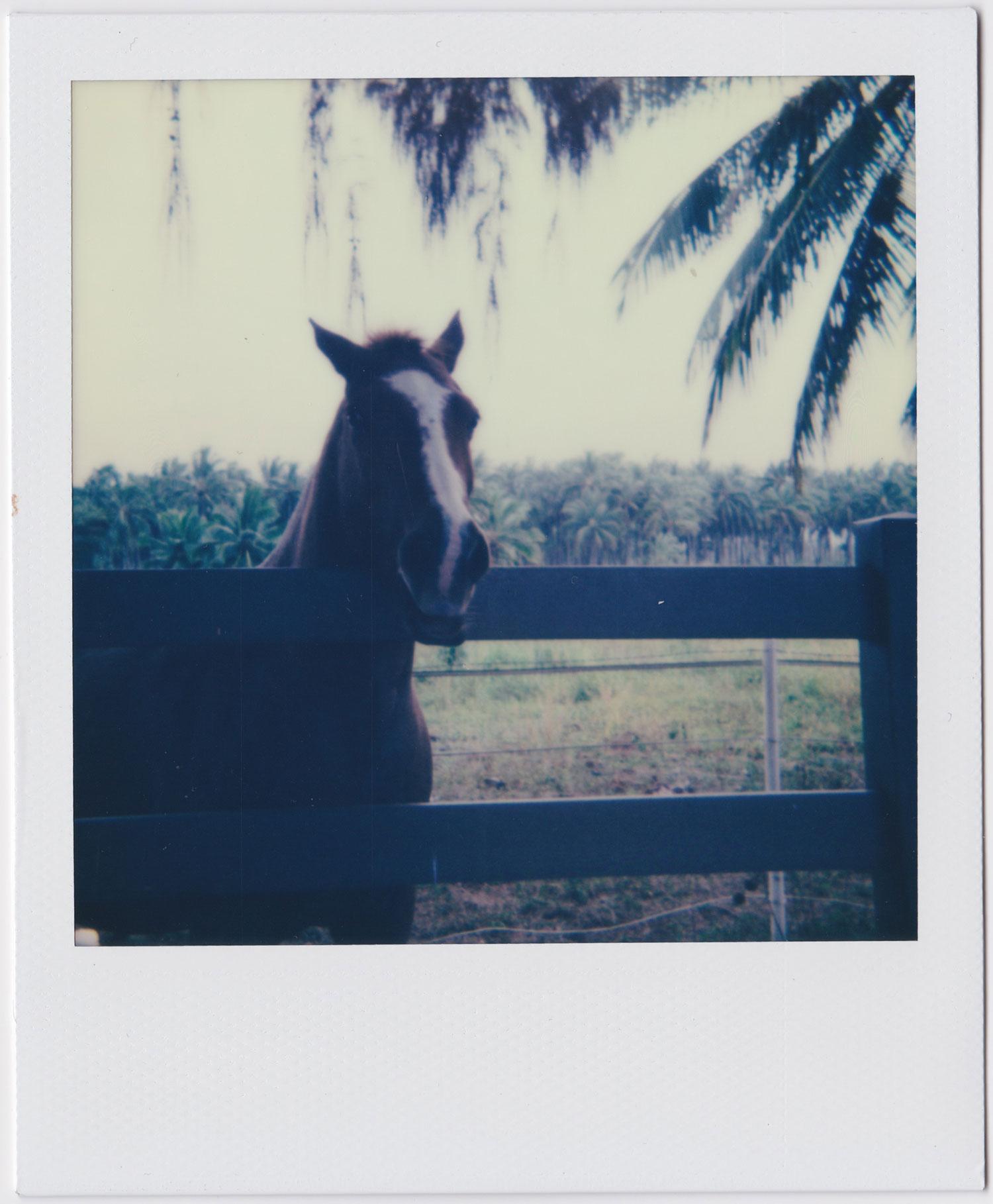 whoiscx_christina_choi_photography_polaroid_film_hawaii_horse_9.jpg