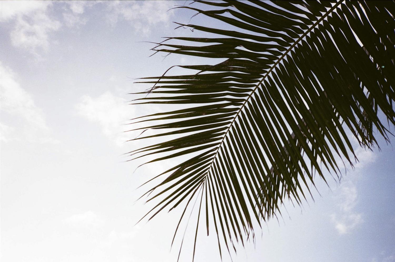 hawaii_22590028.jpg