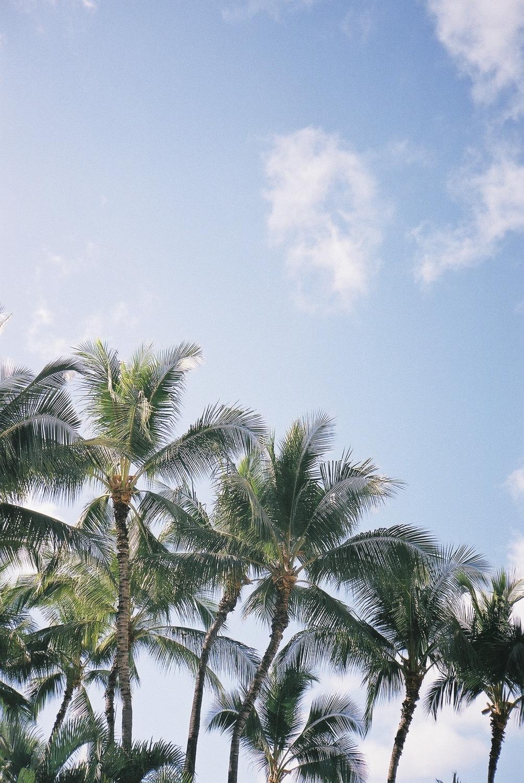 hawaii_f1000012.jpg