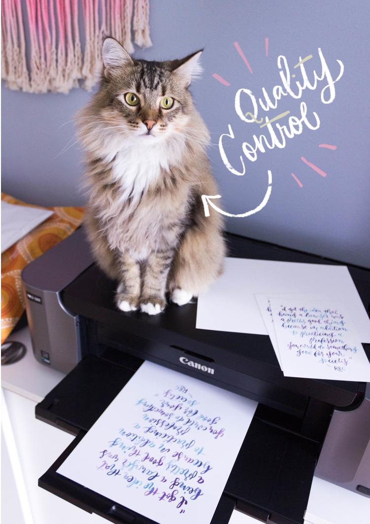 quality control cat