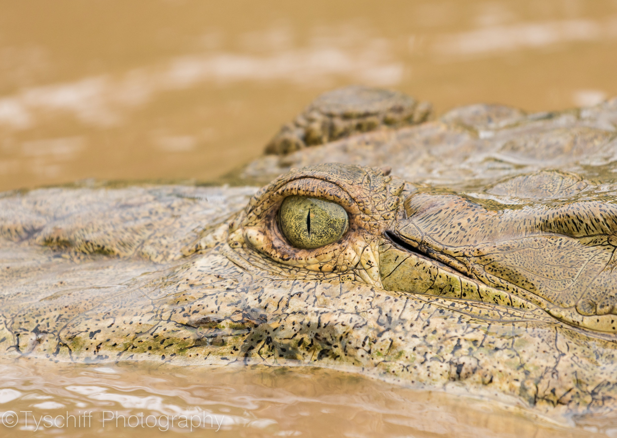 Costa Rica - The Eye of the Croc