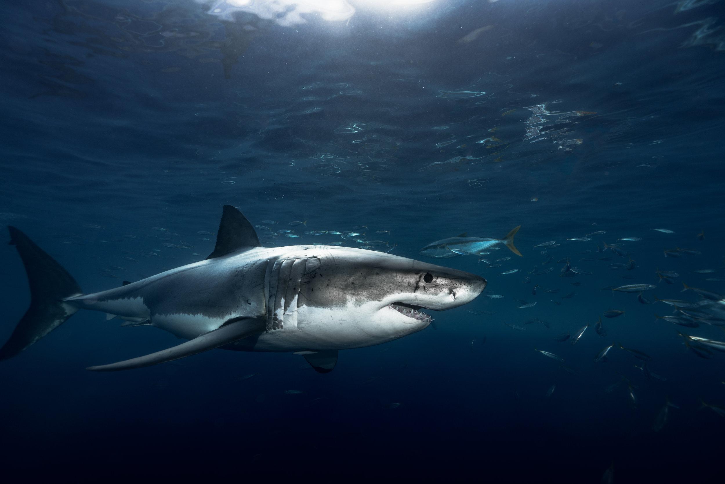 Shark Low Res--21.jpg