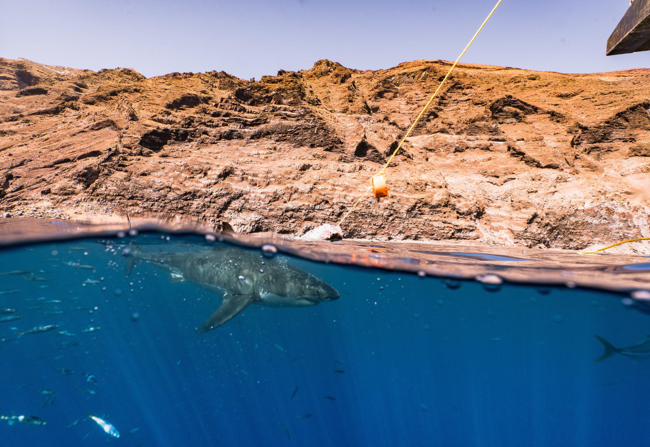 Shark Low Res--22.jpg