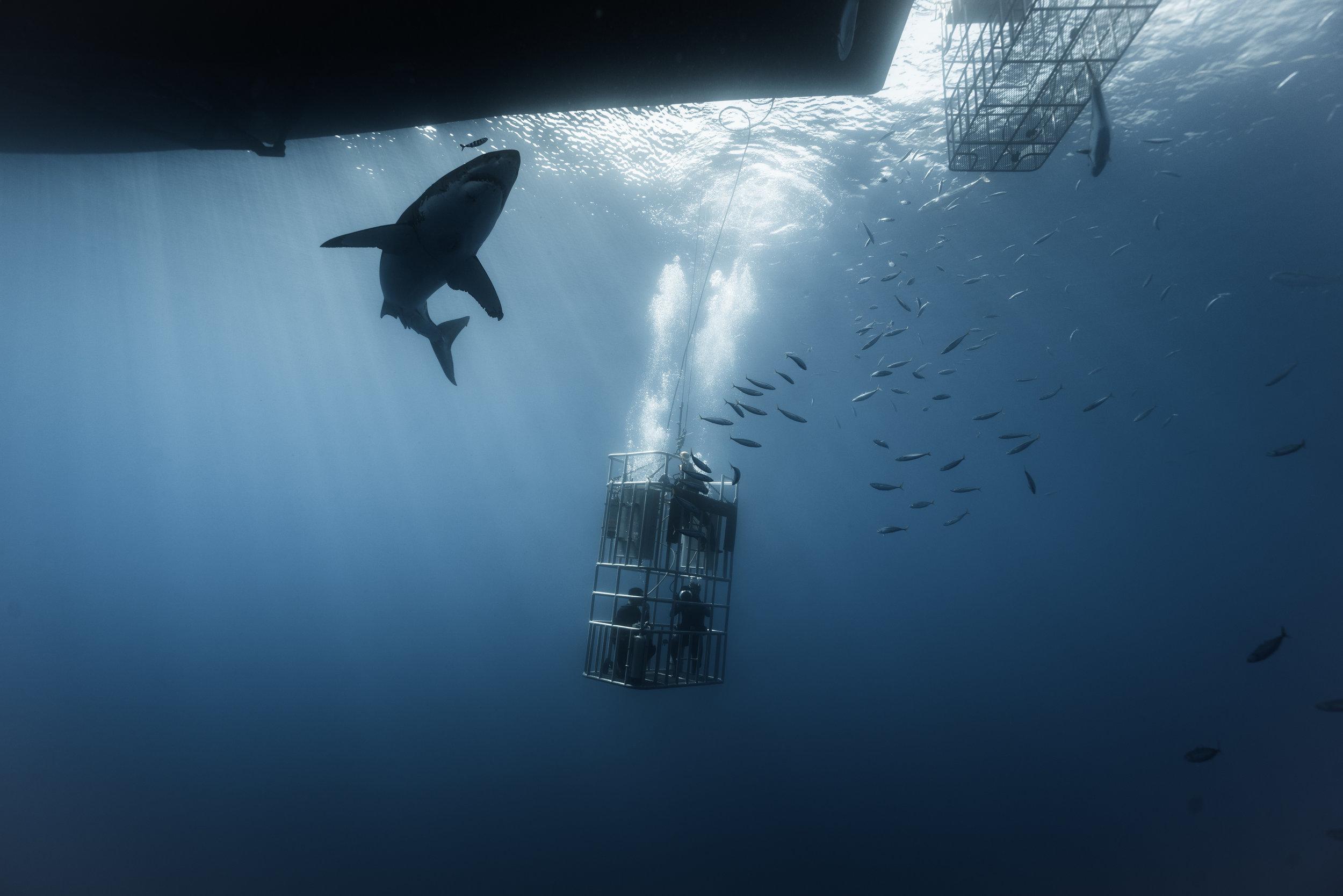 Shark Low Res-09169.jpg