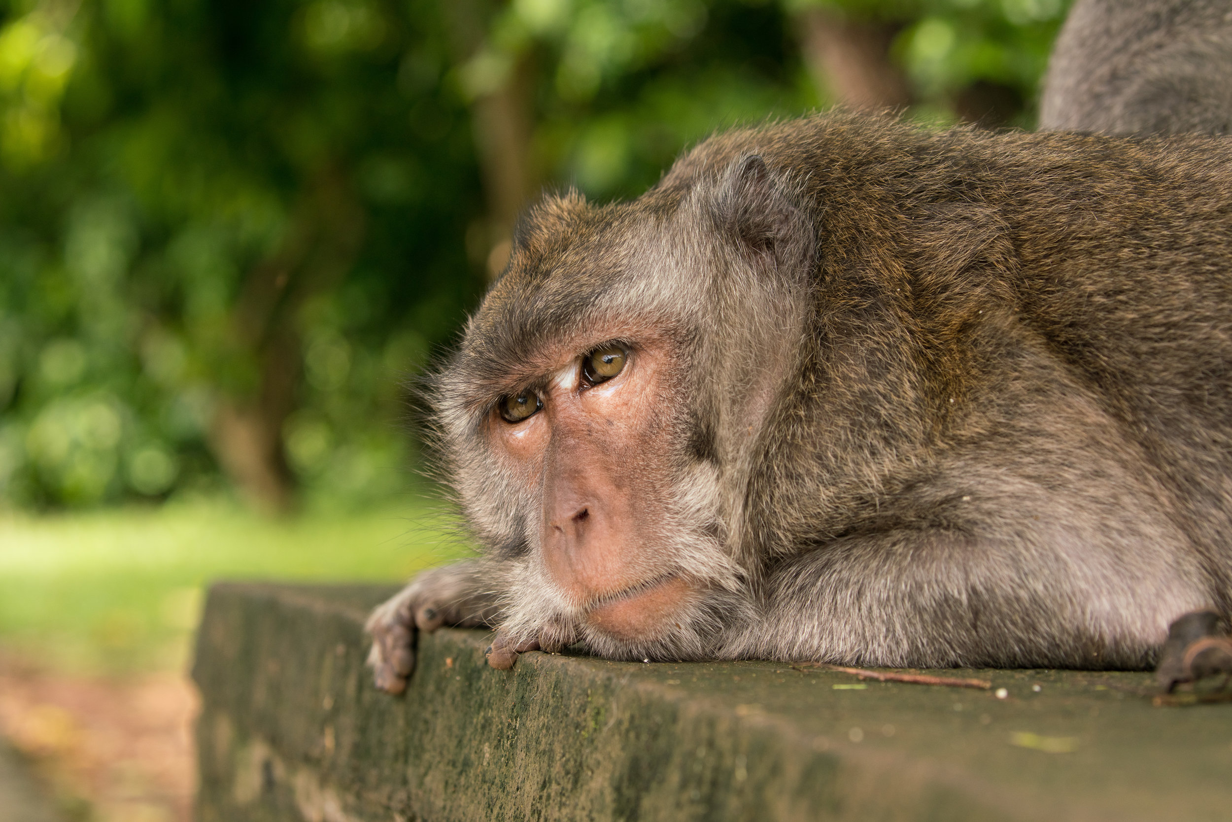 Sleepy monkey-04744.jpg