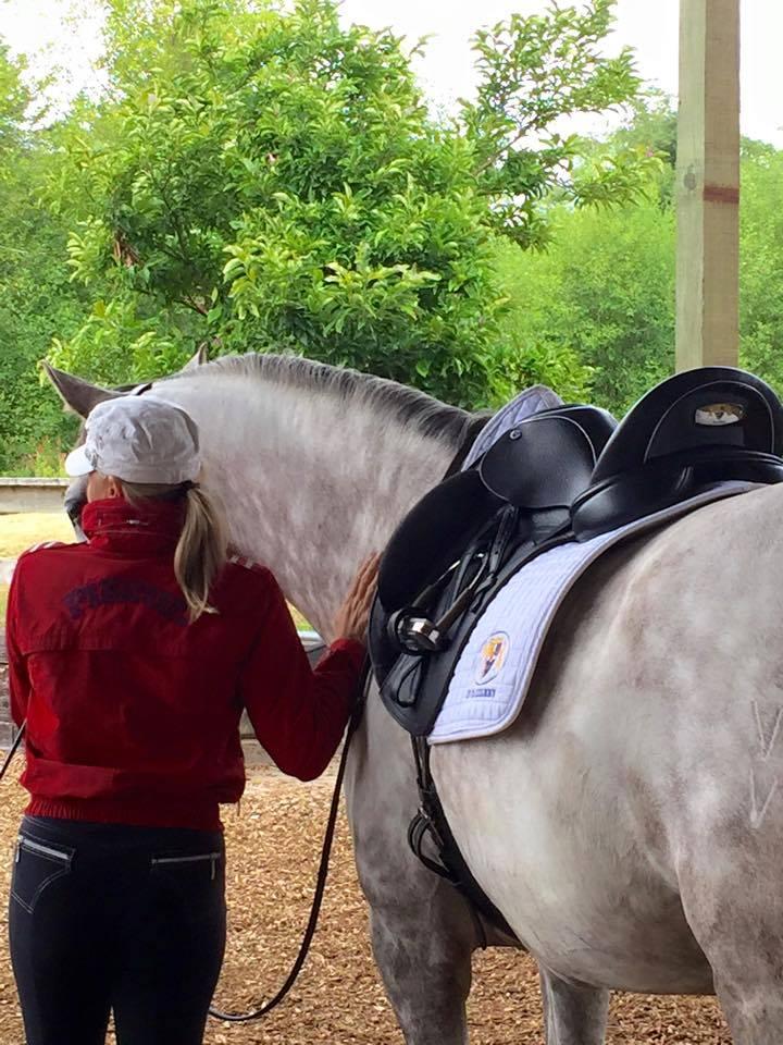 n2-dressage-saddles-for-sale-custom-fitting.jpg