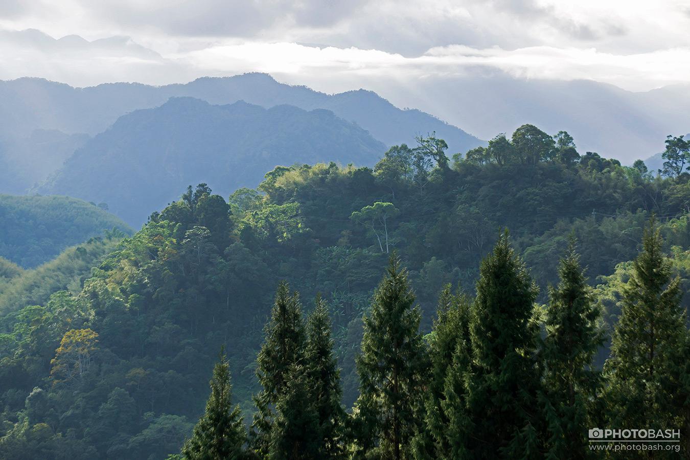 Alishan-Mountains-Misty-Valley-Trees.jpg