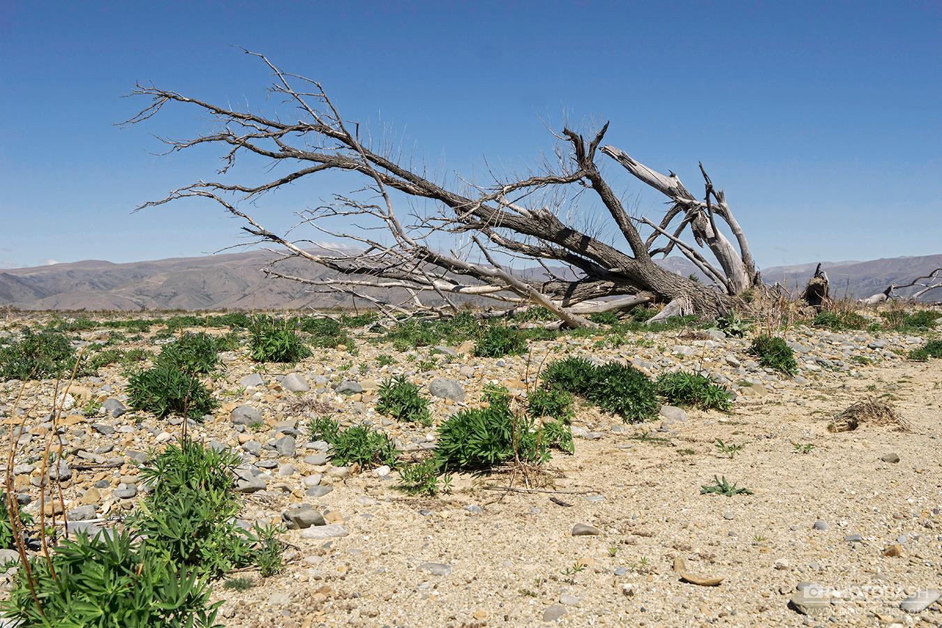 Clay-Cliffs-Wasteland-Dead-Tree.jpg