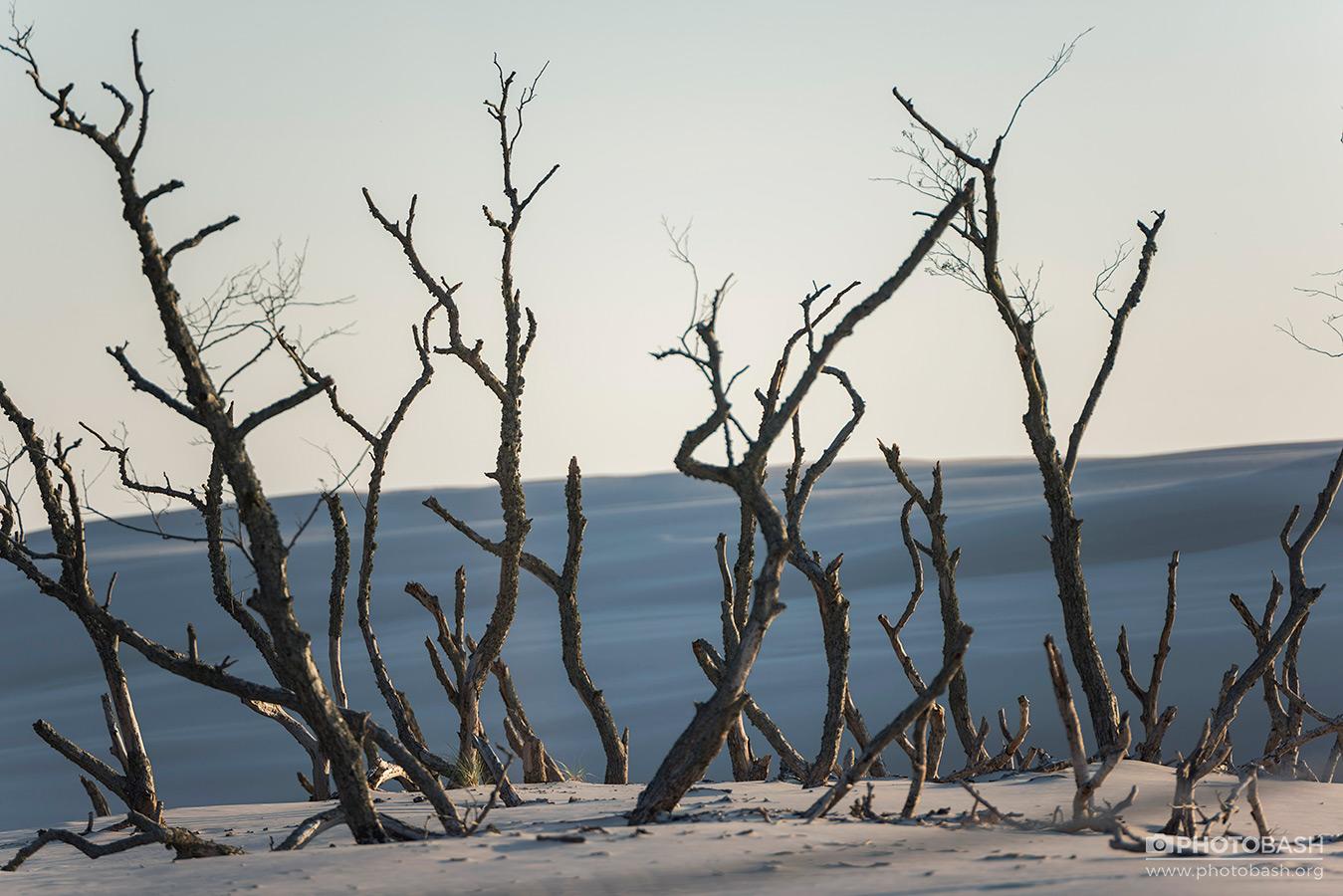 Coastal-Dunes-Beach-Dead-Plants.jpg