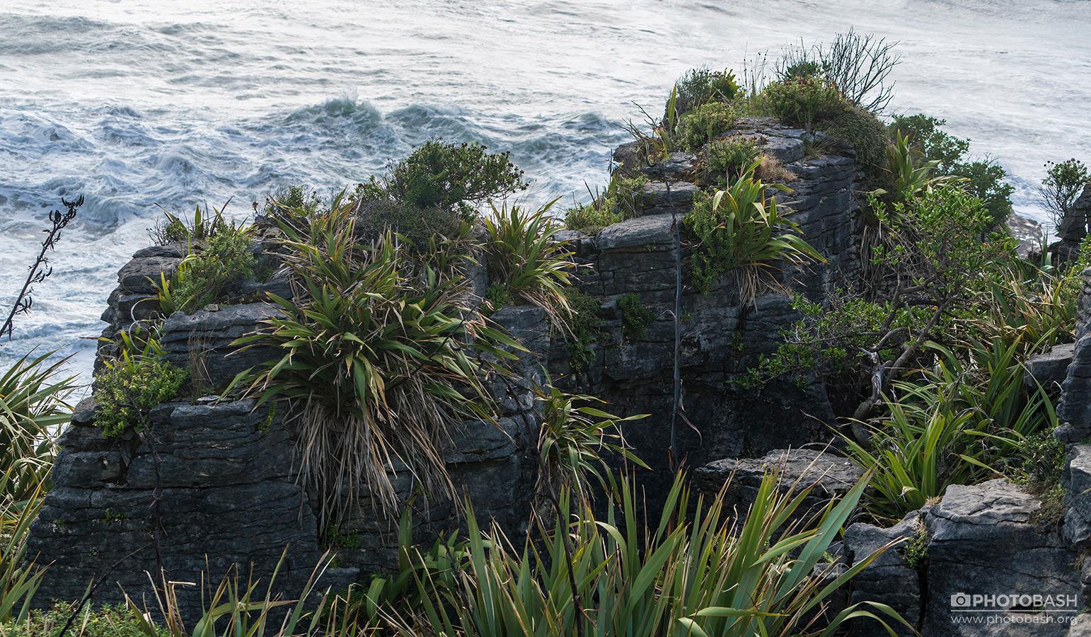 Eroded-Coastline-Cliff-Vegetation.jpg
