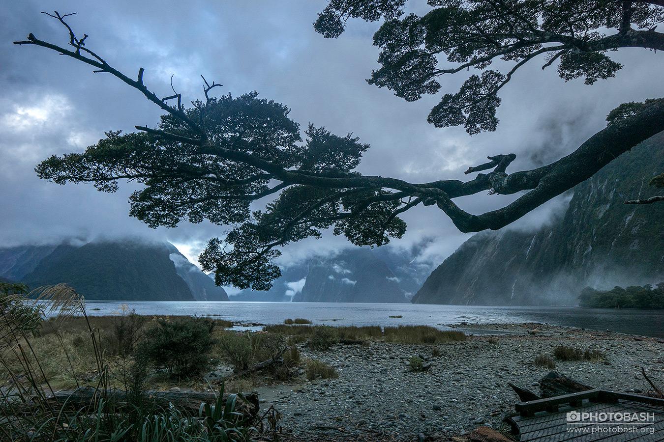 Misty-Lagoon-Gloomy-Lake-Tree.jpg