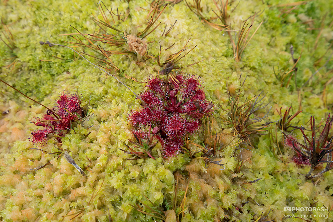 Mossy-Bog-Weird-Swamp-Plants.jpg