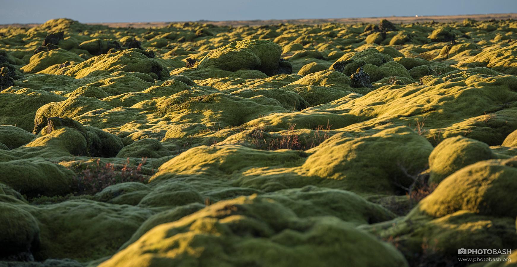 Mossy-Flatlands-Bumpy-Lava-Fields.jpg