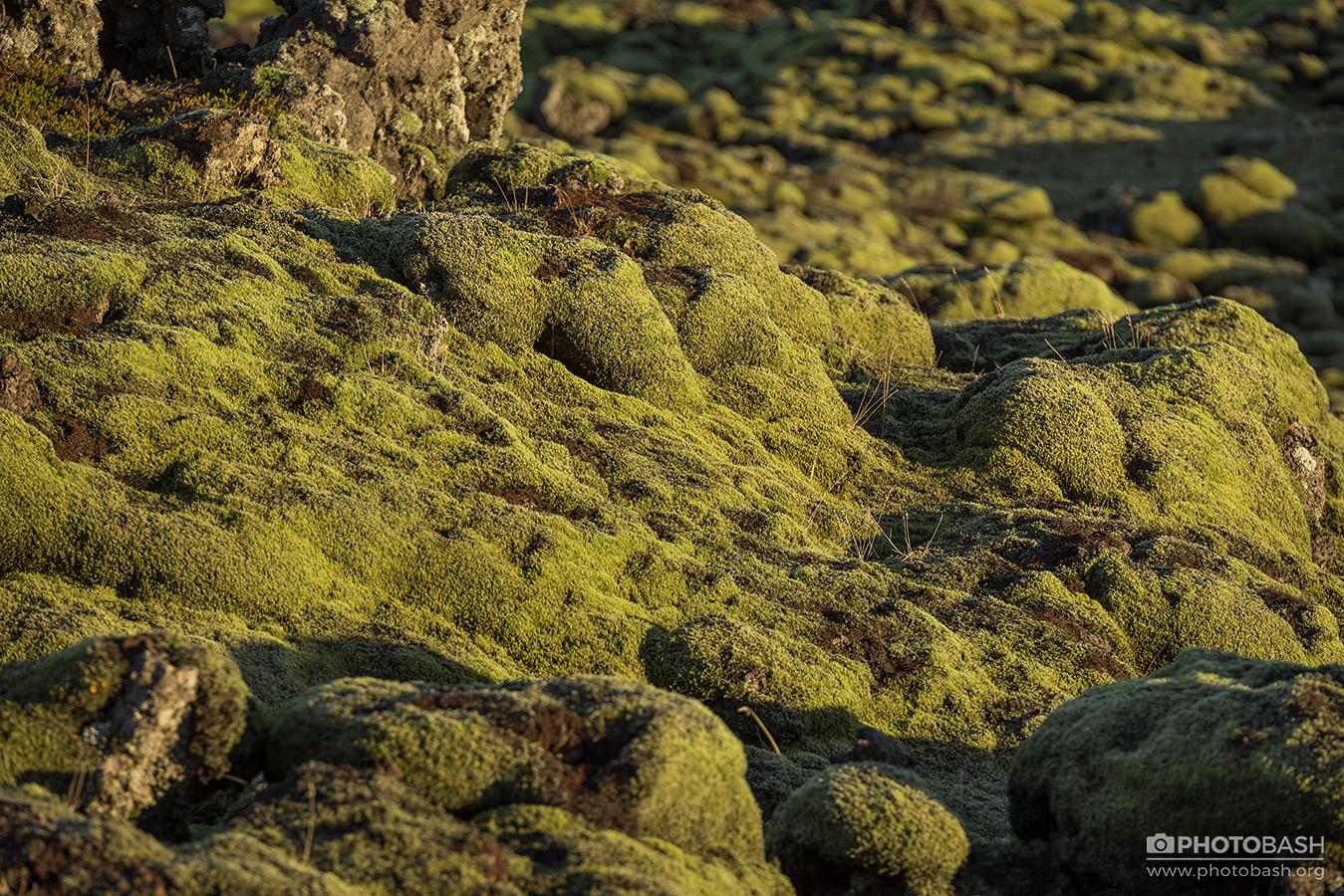 Mossy-Flatlands-Weird-Ground-Texture.jpg