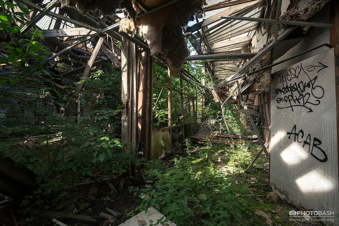 Overgrown-Factory-Urban-Exploration.jpg